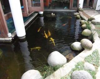 Pond of fish dating service